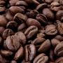 doi_chaang_wild_civet_coffee_2