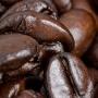 doi_chaang_wild_civet_coffee_3
